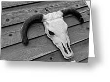 Skull In North Dakota  Greeting Card