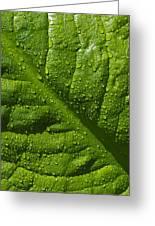 Skunk Cabbage Leaf Greeting Card