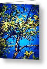 Sky Bloom Greeting Card