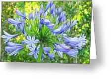 Sky Blue Flowers Greeting Card