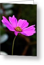 Sky Facing Flower Greeting Card