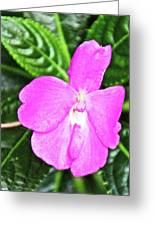 Sky Flower In Huntington Botanical Gardens In San Marino-california  Greeting Card
