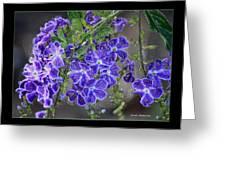 Sky Flower Window  Greeting Card