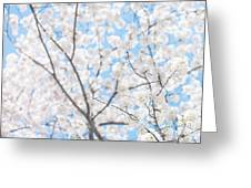 Sky Full Of Blossoms Greeting Card