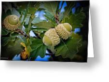 Sky Lit Oak Acorns Greeting Card