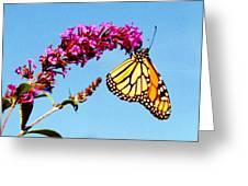 Skylands Monarch Greeting Card