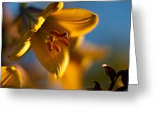 Skylit Lily Greeting Card