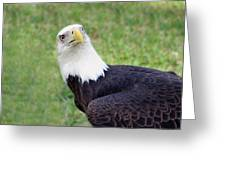 Skyward Eagle Greeting Card
