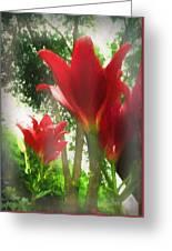 Skyward Red Lilies Greeting Card