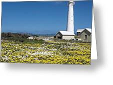 Slangkop Lighthouse, Kommetjie  Greeting Card