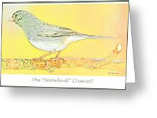 Slate Colored Junco The  Greeting Card