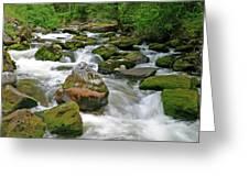 Slate Creek, Nez Perce National Forest, Idaho Greeting Card