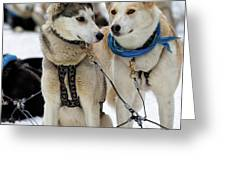 Sled Dogs Greeting Card by David Buhler