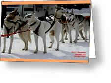 Sledge Dogs H A Greeting Card