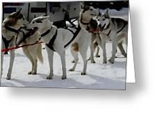 Sledge Dogs H B Greeting Card