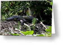 Sleeping Alligator Greeting Card