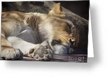Sleeping Beauty,  Houston Zoo Greeting Card