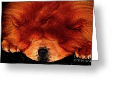 Sleeping Chow Chow Greeting Card
