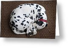 Sleeping Dalmatian II Greeting Card