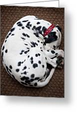 Sleeping Dalmatian Greeting Card