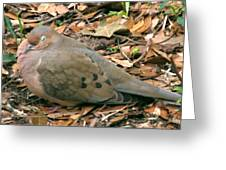 Sleeping Dove Greeting Card