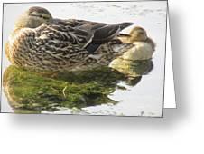 Sleeping Ducks. Greeting Card