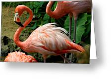 Sleeping Flamingo Greeting Card