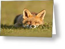Sleeping Fox Kit Greeting Card
