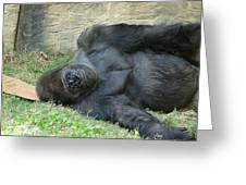 Sleeping Gorrilla Greeting Card