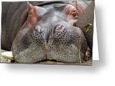 Sleeping Hippo Greeting Card
