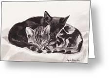 Sleeping Kittens Greeting Card