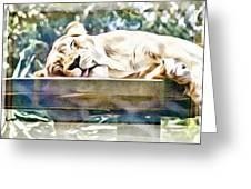 Sleeping Kittykat Greeting Card