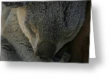 Sleeping Koala Bear Greeting Card
