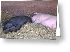 Sleeping Pigs In The Hay Greeting Card