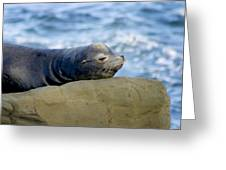 Sleeping Sea Lion Greeting Card