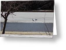 Sleeping Seagulls Greeting Card