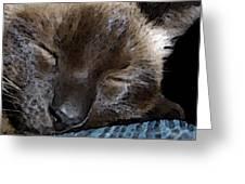 Sleeping Siamese Cat Greeting Card