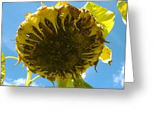 Sleeping Sunflower Greeting Card