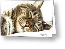 Sleeping Tabby Cat  Greeting Card