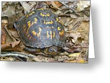 Sleeping Turtle Greeting Card