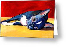 Sleepy Boston Terrier Dog  Greeting Card