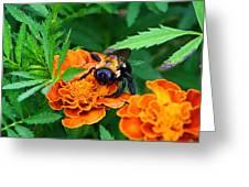 Sleepy Bumblebee Greeting Card