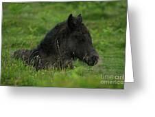 Sleepy Dartmoor Foal Greeting Card