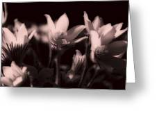 Sleepy Flowers 2 Greeting Card