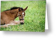 Sleepy Foal Greeting Card