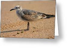 Sleepy Gull Greeting Card