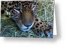 Sleepy Leopard Greeting Card