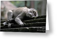Sleepy Monkey In Monkey Forest Ubud Bali Greeting Card