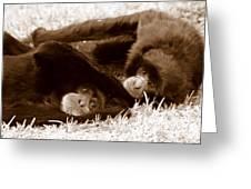Sleepy Monkeys Greeting Card