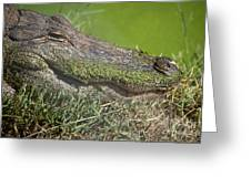 Sleepy Papa Gator Greeting Card
